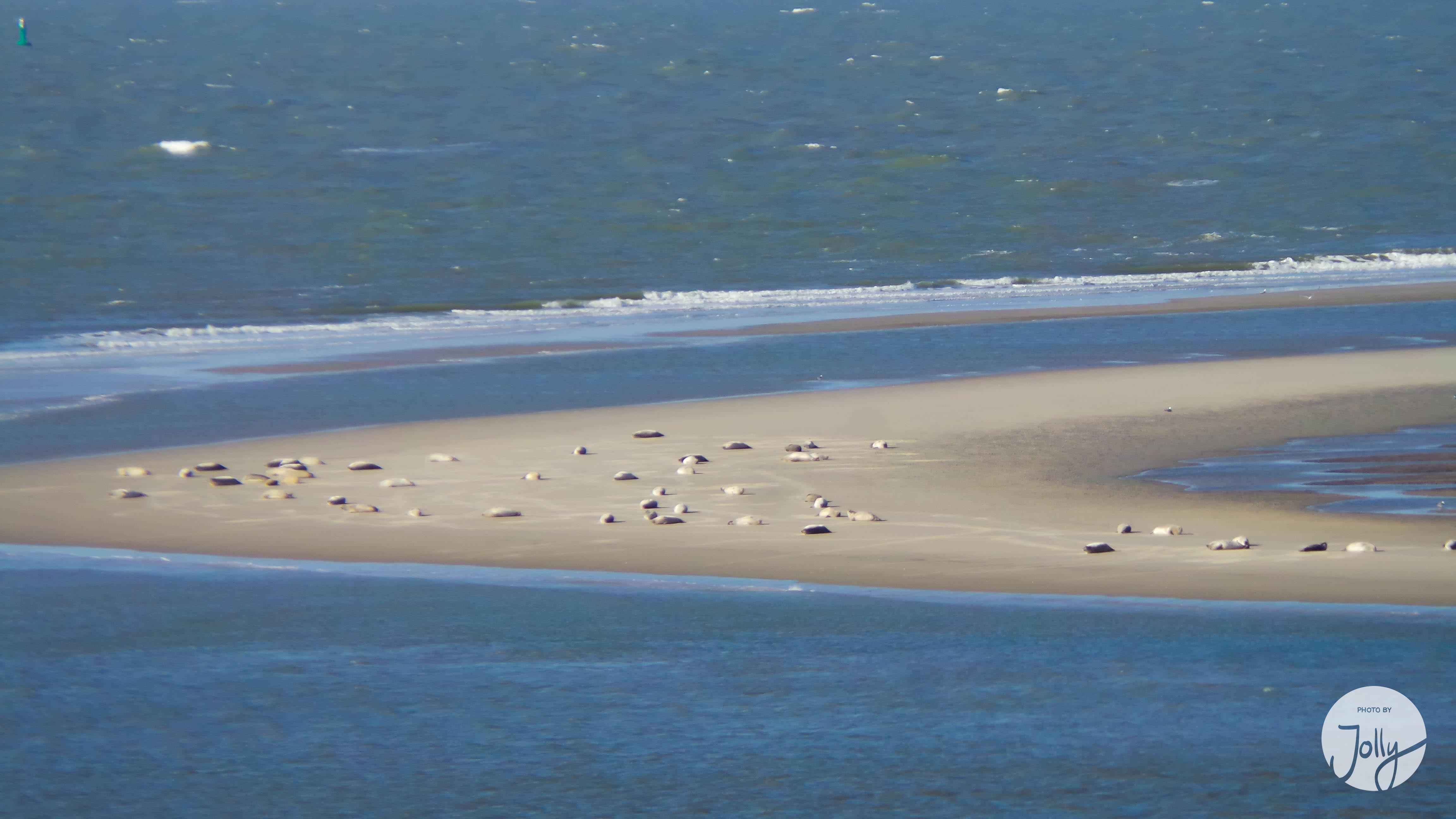 Borkum im Winter Seehundbänke