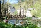 Wandern in Belgien für Anfänger - jollyandluke.de